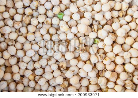 dried peas - plant light legume texture