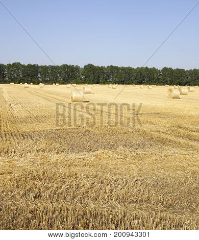 Straw On The Fields Photo