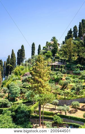 Daylight view to mountain with park and full of green trees. Portofino Italy