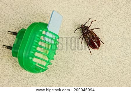 Electric insect protection device and brown beetle