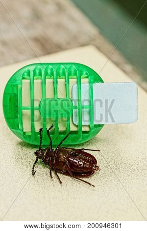 Electric insect repeller and big brown beetle