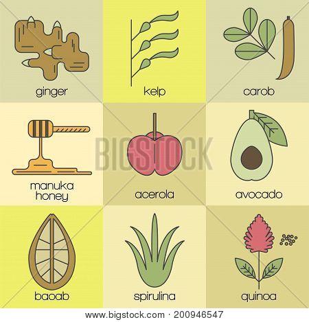 Superfood color line icons set. Color background.  Ginger, kelp, carob, manuka honey, acerola, avcado, baobab, spirulina, quinoa. Vector illustration.