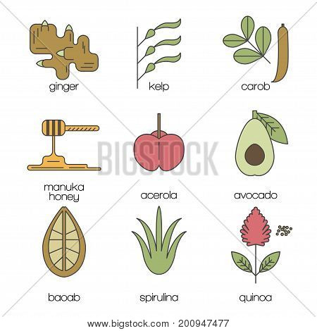 Superfood color line icons set. Ginger, kelp, carob, manuka honey, acerola, avcado, baobab, spirulina, quinoa. Vector illustration.