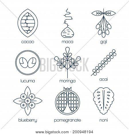 Superfood line icons set. Cacao, maca root, goji, lucuma, moringa, acai, blueberry, pomegranate, noni. Vector illustration.