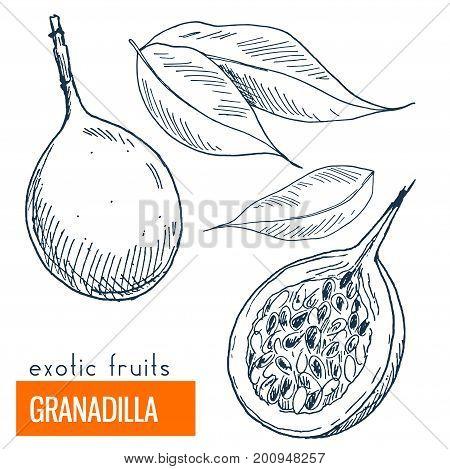 Granadilla. Hand drawn vector illustration, vintage enngraving style.