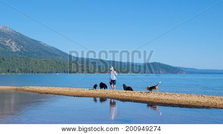 South Lake Tahoe, California - August 2017: Dog lover playing with dogs at South Lake Tahoe in California
