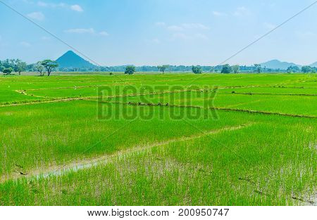 The Agricultural Region In Sri Lanka