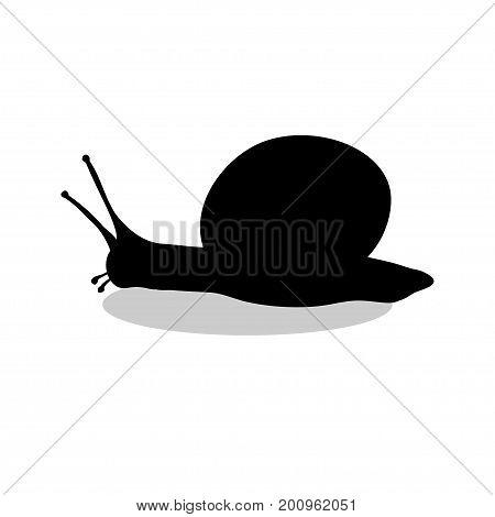 Snail mollusk shell black silhouette animal. Vector Illustrator.