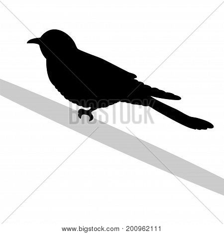 Cuckoo bird  black silhouette animal. Vector Illustrator.