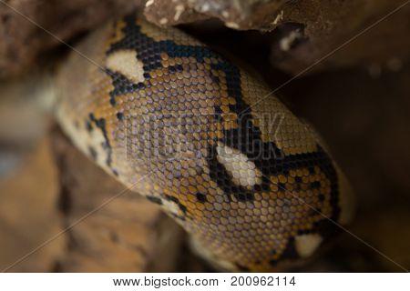 Close Up Pattern Boa Snake Skin Abstract Textured