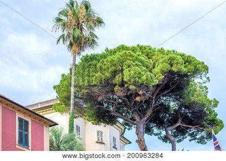 Daylight view to a green palm tree near buildings of Santa Margherita Ligure, Italy.