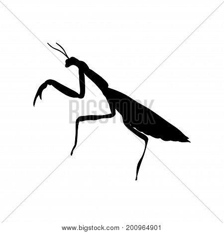 Praying mantis insect black silhouette animal. Vector Illustrator.