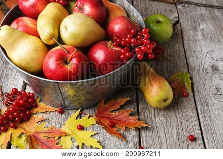 Autumn harvest and thanksgiving card background. Various fruits, rowan, apples, pears in old metal basin and fall leaves on weathered rustic wood with copy space