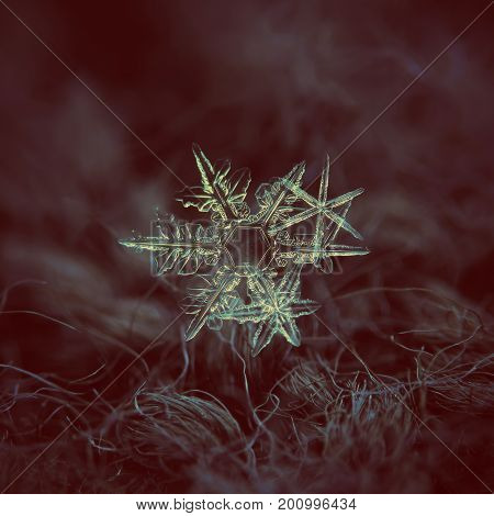 Macro photo of real snowflakes: cluster of three stellar dendrites of different size and shape. All snowflakes have transparent structure and thin, sharp arms. Snowflakes glowing on dark background.