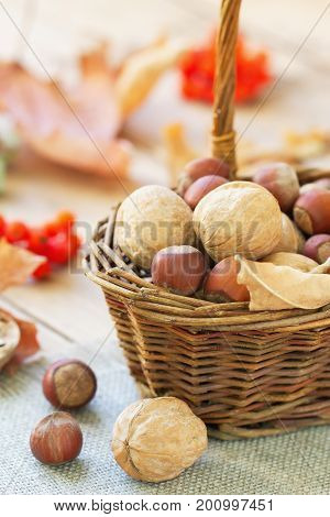Walnuts And Filberts In A Basket