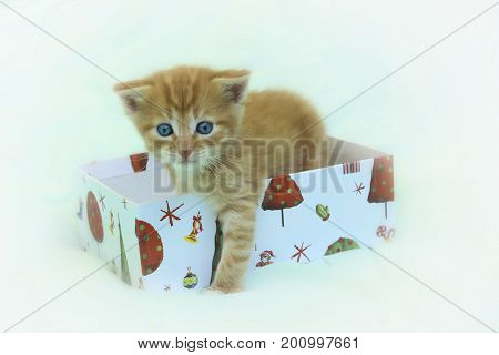 Cute little kitten sitting in the Christmas box over blurred light-blue background.