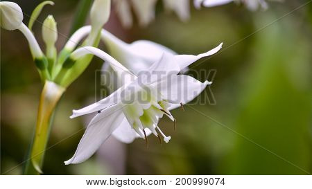 Beautiful intense color flower with green background