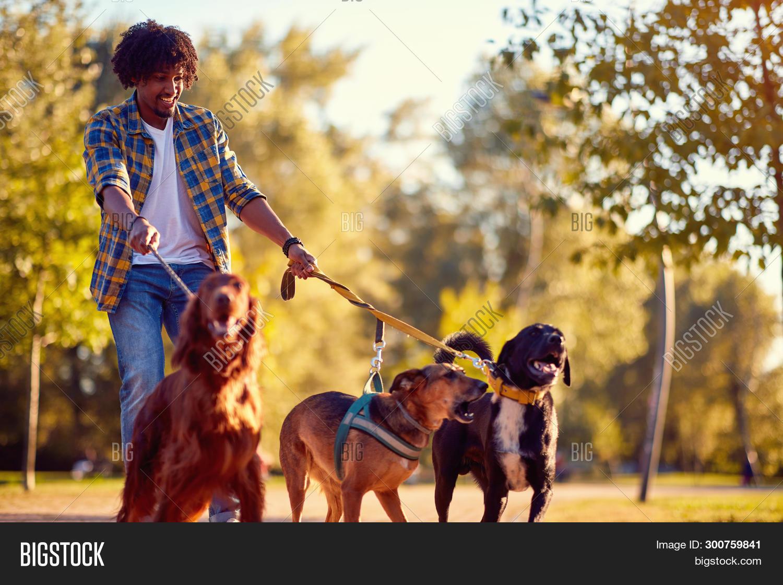Walking Dogs - Happy Image & Photo (Free Trial) | Bigstock