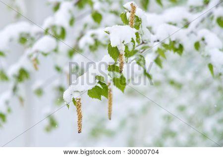 Spring snowfall.