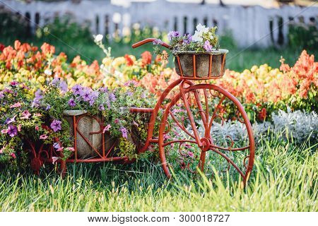 Decorative Retro Vintage Model Old Bicycle Equipped Basket Flowers Garden. Summer Flower Bed With Pe