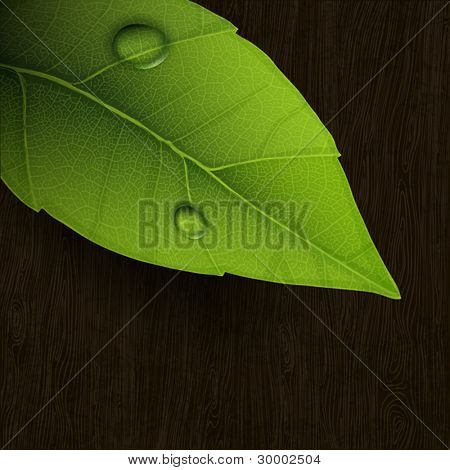 Fresh green leaf on wooden background. Vector, eps10.