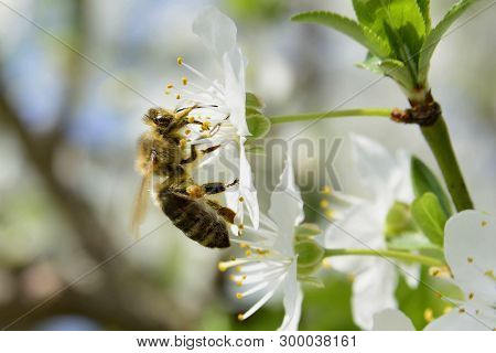 Spring; Flowers, Bees And Pollinaters Working Everyhere