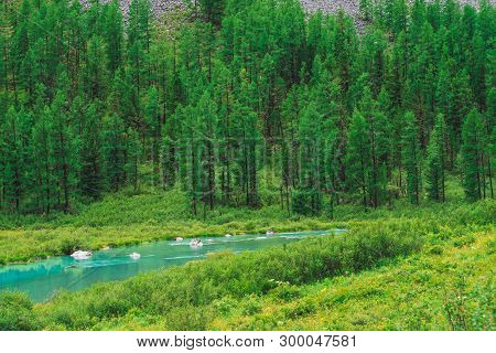 Mountainside With Conifer Forest Behind Small Mountain Creek In Sunny Day. Many Coniferous Trees On