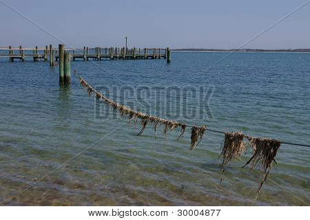 Dried Seagrass On Line Over Ocean