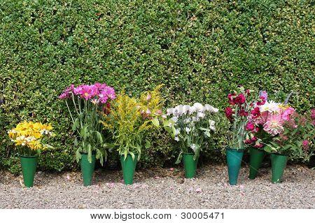 Potten blommor
