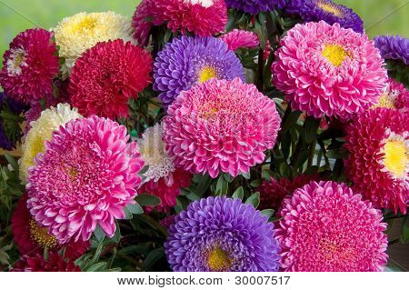 A Bouquet Of Fresh Asters