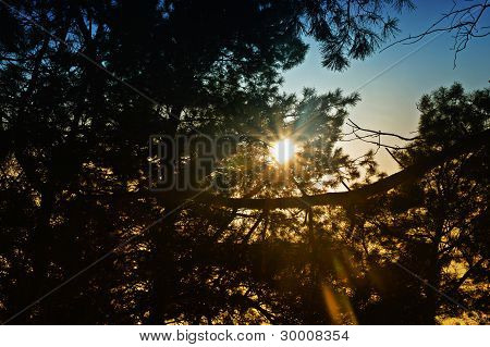 Ray Of Sun In Deep Forest