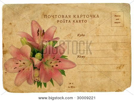 Blooming Flower Of Pink Lily. Old Postcard