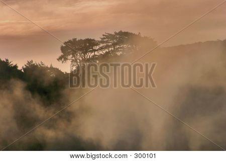 Misty Coastal Morning