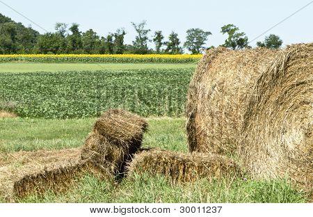 Sunny Farmland