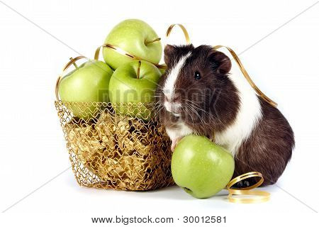 Guinea Pigs with fruit In A Gold Basket