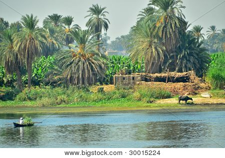 Nile riverside - rural life, Egypt