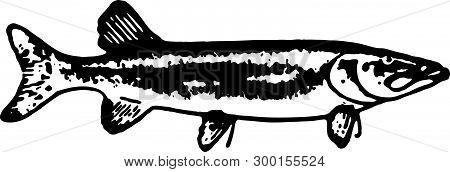 Sardine Fish - Retro Ad Art Illustration