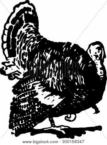 Turkey - Retro Ad Art Illustration For Thanksgiving