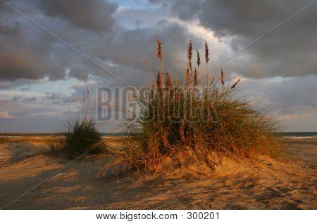 Dune At Dusk