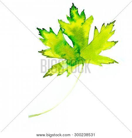 Watercolor autumn leaf. Fall foliage. Autumnal design. Seasonal decorative beautiful multi-colored drawing leaves. Original artwork.
