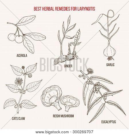 Best Herbal Remedies For Laryngitis. Hand Drawn Botanical Vector Illustration