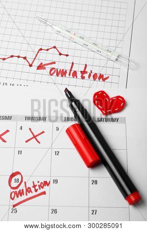 Day To Conceive Child. Family Planning. Ovulation Day In Calendar.