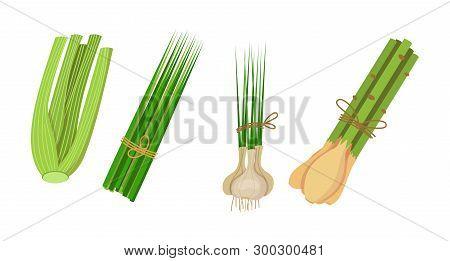 Healthy, Environmentally Friendly Natural Vegetation. Celery, Lemongrass, Chives, Garlic.