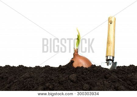 Green Sprout Growing Out From Soil Isolated On White Background. Gardening Tools On Fertile Soil Tex