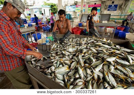Samutsakorn Thailand - September8,2018 : Worker Collecting Size And Kind Of Fish Was Catching From F