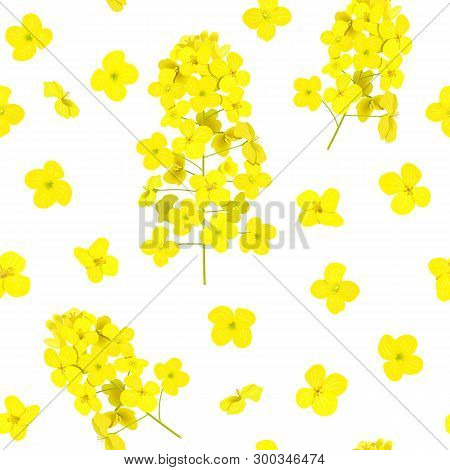 Blossoming Rapeseed Seamless Pattern Isolated. Canola Or Colza. Brassica Napus. Blooming Rape Yellow