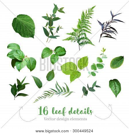 Greenery Leaves Vector Big Collection. Forest Fern, Agonis, Hydrangea Leaf, Foliage, Plants Mix. Han