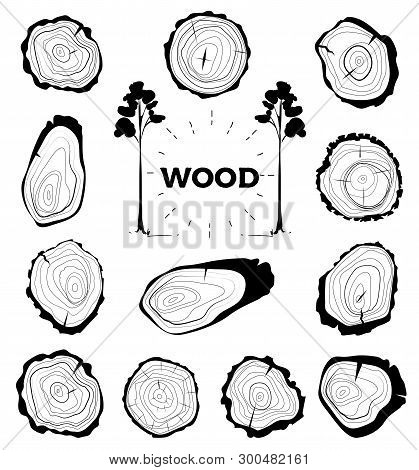 Collection Of Tree-rings. Set A Cross Section Of The Trunk With Tree Rings. Vector Illustration. Log