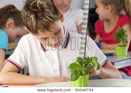 Boy learning about plants in school class