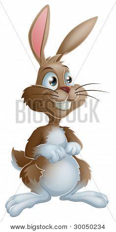 Bunny Rabbit Cartoon Character Illustration